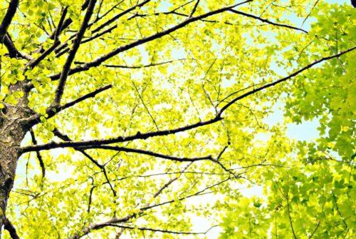 alberi1761x708pxNew